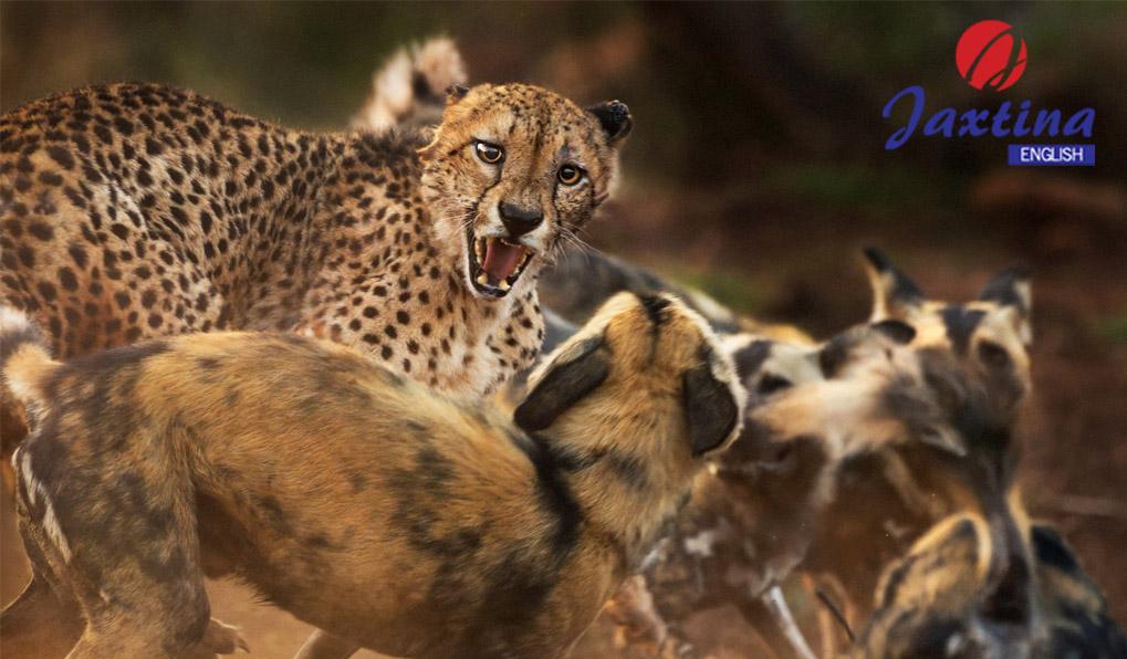 Từ vựng Tiếng Anh chủ đề sự đe doạ đến thế giới hoang dã ( Wildlife under threat)