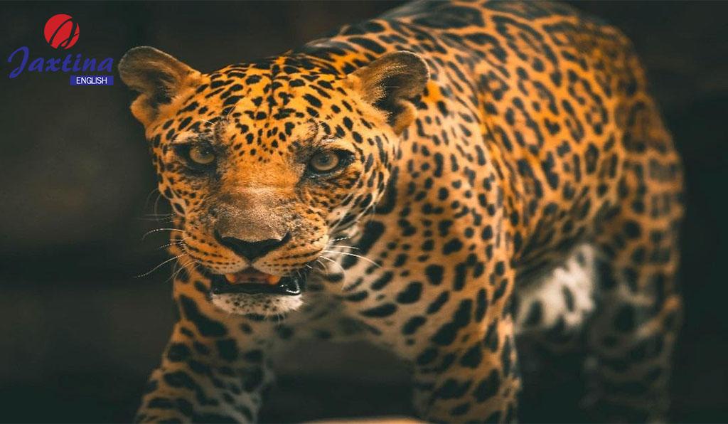 Từ vựng tiếng Anh thú vị về các loài động vật và côn trùng quen thuộc (common animals and insects)